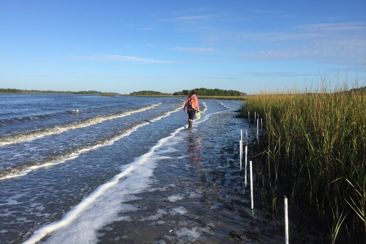 The Intracoastal waterway experiences high rates of shoreline erosion due to boat wake and wave energy