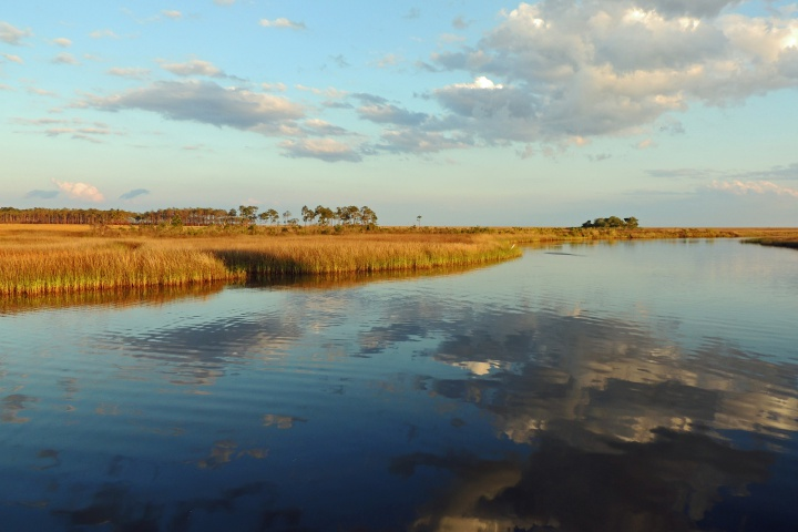 Grand Bay Reserve; Photo credit: Lucy Jacobson