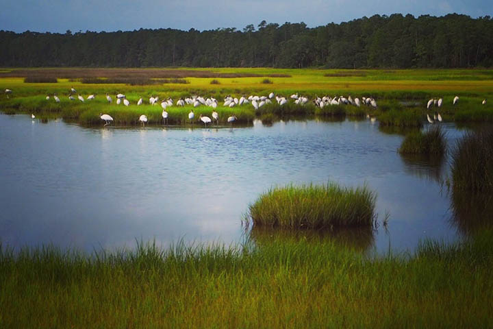 The project summarized regional findings, identified research needs, and developed guidance to help coastal managers improve salt marsh resilience across the Southeast.