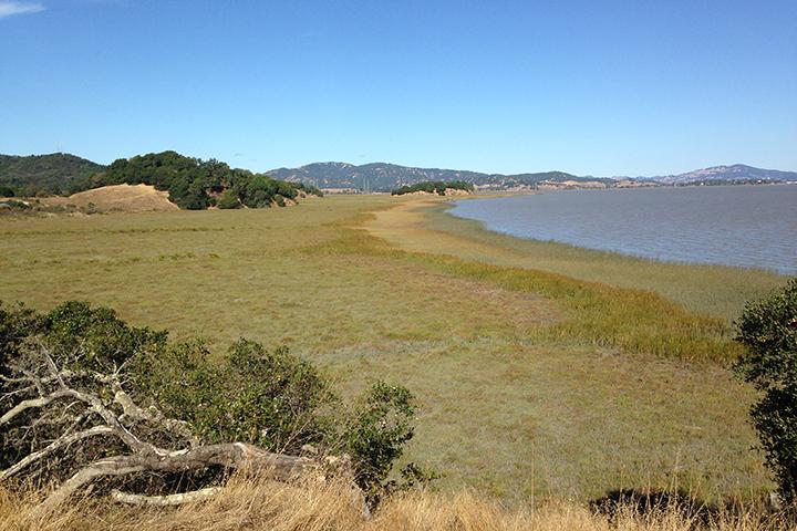 China Camp Marsh Edge (photo credit: Matt Ferner)