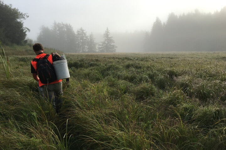To assess the financial viability of blue carbon, the PNW Blue Carbon Working Group and its partners looked at three potential wetland restoration sites in the Snohomish, Skagit, and Coos estuaries. Photo credit: Leila Giovannoni.