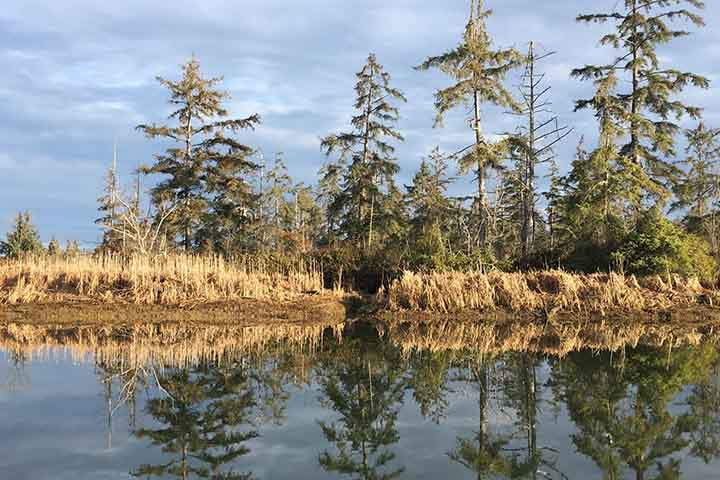Some of the most promising blue carbon opportunities cover large areas and focus on restoring forested tidal wetlands such as Sitka spruce swamp.