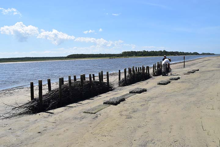 The project has inspired similar living shoreline treatments in nearby estuaries