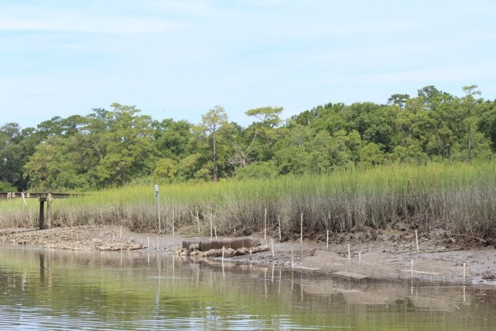 South Carolina agencies are using the project's findings to simplify the permitting process for private property owners to use living shorelines.
