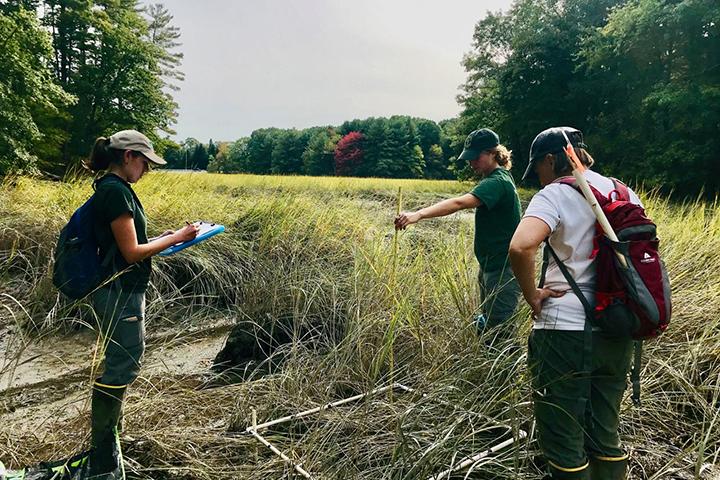Annual marsh monitoring at Great Bay, NH. (Credit: Chris Peter)