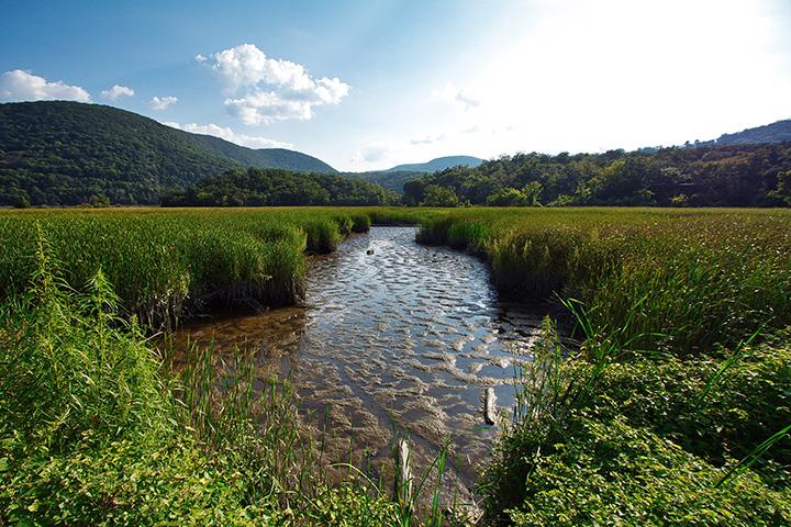 Iona Island Wetlands, Hudson River NERR (Ben Von Klemperer)