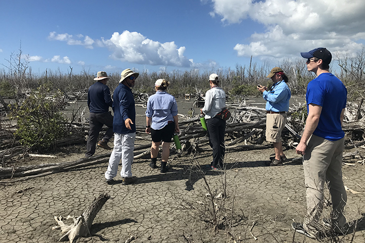 This project team will create maps showing where and when mangrove forests have been damaged. (Photo credit: Danielle Ogurcak)