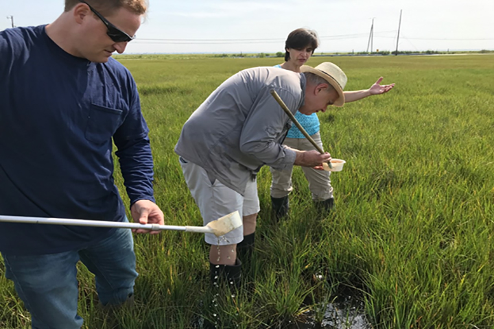 Dipping marsh pools to look for mosquito larvae