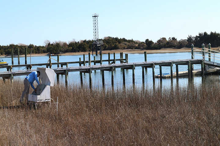 One of the project's sampling sites at a stormwater outfall in Beaufort, NC.