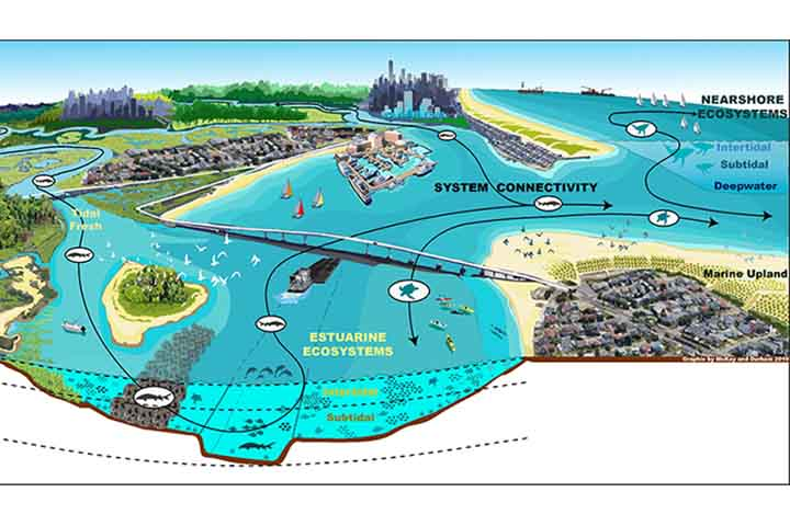 However, barrier structures reduce water flow and tidal exchange. They can impact water quality and ecological processes in estuaries and wetlands. The New Jersey Bight Ecosystem, graphic from the US Army Corps of Engineers.