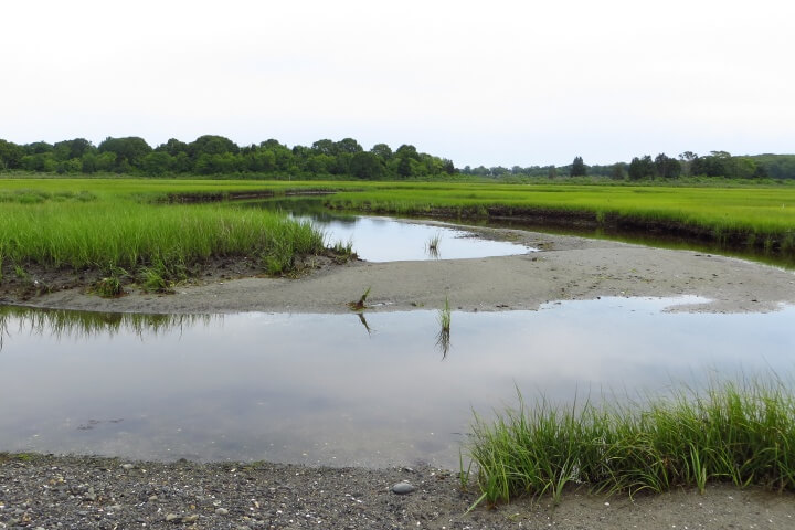Narragansett Marsh at Narragansett Bay NERR