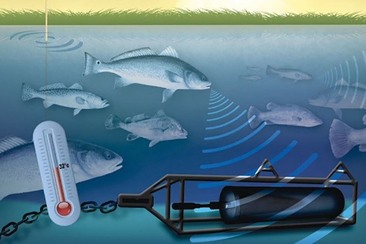 This shows passive acoustic monitoring using a very sensitive listening device to capture sounds underwater. (Design by Tim Devine, USCB Graphics Manager, reprinted from Monczak et al. 2017: https://doi.org/10.3354/meps12322)