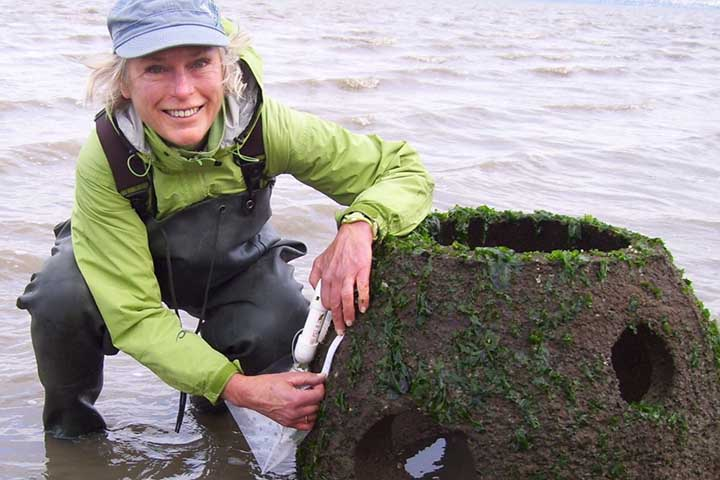 Citizen scientist monitoring an oyster reef ball, Point Pinole Regional Shoreline, CA. Photo credit: Helen Fitanides, The Watershed Project.