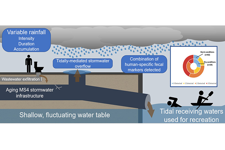 This figure illustrates key findings about how waste water is contaminating stormwater and impacting coastal waters (credit: Hart et al. 2020).