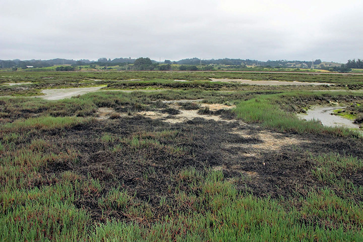 Tidal marshes across the continental U.S. are threatened by sea level rise