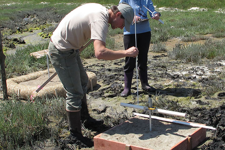 A coordinated restoration experiment at eight National Estuarine Research Reserves tested the effectiveness of TLP in different marsh communities