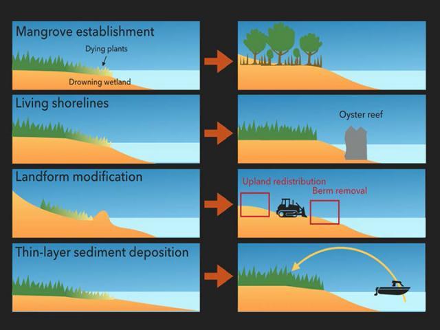 A visual depiction of four possible strategies for wetland elevation management we will explore in our new collaboration.