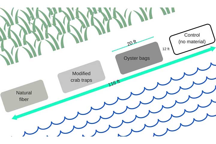 Researchers gathered information about the performance of these different living shoreline techniques over time and under a range of conditions.