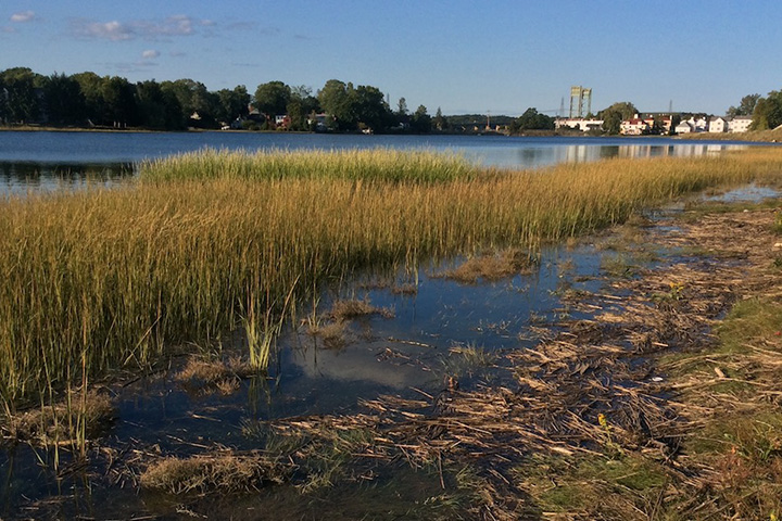 Vegetated buffers along rivers and bays are a widely recognized strategy to protect water quality.