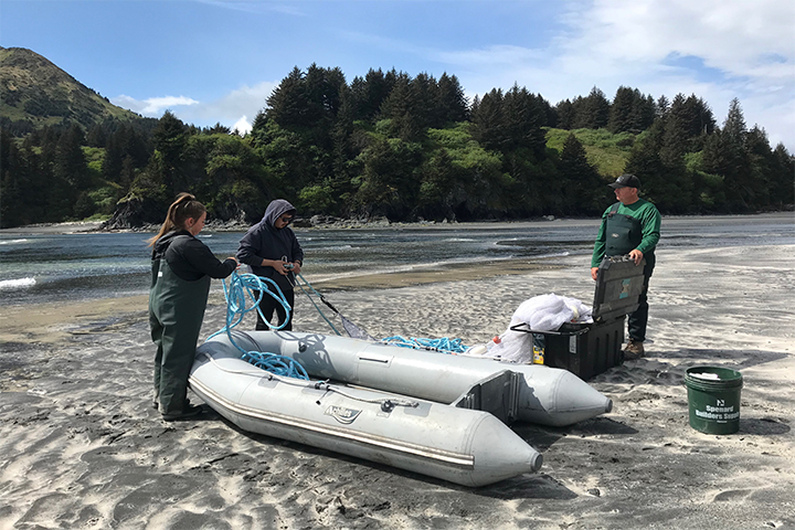 Project team members Chris Guo (KBNERR) and Steve Kibler (NOAA Beaufort Laboratory), and student Cairone Reft (UAF SeaGrant) prepare to collect nearshore fishes using a beach seine in Kodiak, Alaska. This sampling event was an opportunity to connect project team members and end users in-person and strengthen collaborative efforts on the issue of the trophic transfer of toxins via forage fishes. Photo credit: Julie Matweyou (UAF SeaGrant)