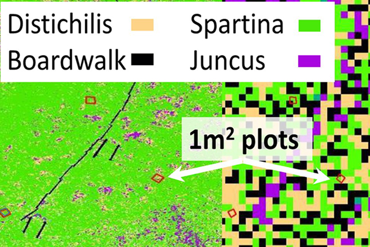 Satellites often provide insufficient resolution to detect species composition right panel); whereas drones can provide cm-scale resolution (left panel). (Figure from report by Bickford and Spurrier, 2016)