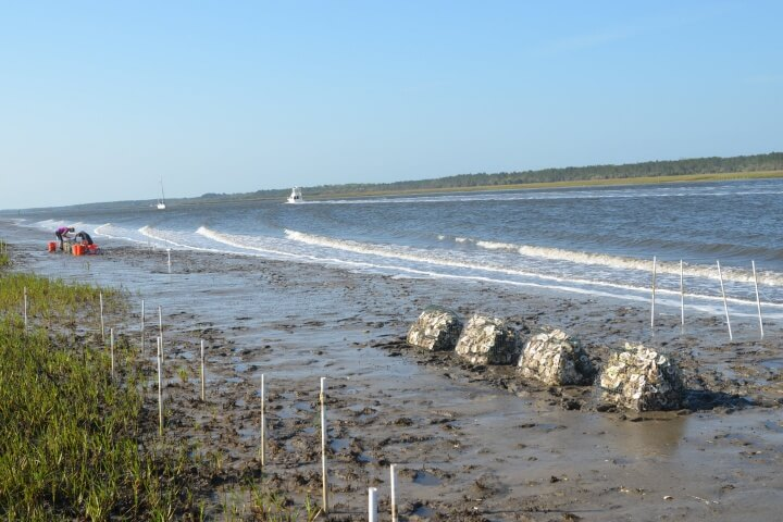 Gabions (cages filled with oyster shell) are positioned behind breakwalls to foster oyster growth