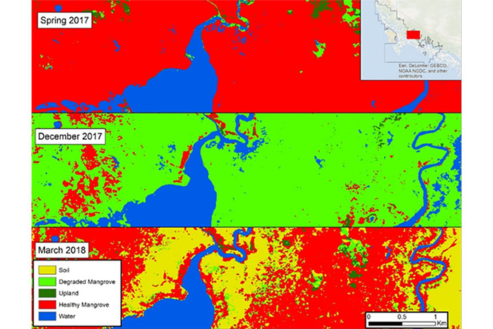 These maps illustrate mangrove habitat change over time and the dynamics of hurricane damage and recovery