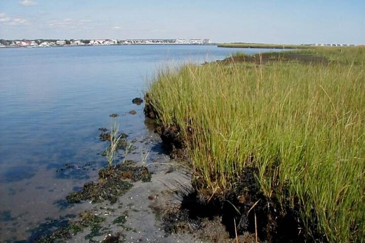 New Jersey marsh and coastal community