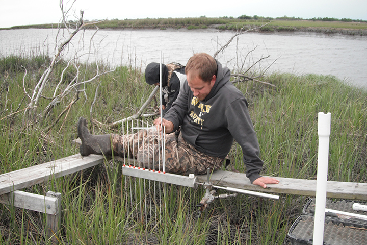 This data includes Surface Elevation Tables that show precise measurements of marsh surface over time. Photo credit: Delaware NERR