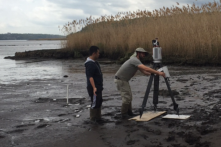 The team measured local stands of cattails and invasive Phragmites to ensure the team's model would accurately simulate marsh vegetation. (Credit: C. Angelini)