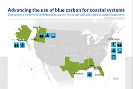 Blue Carbon Management Brief and Infographic