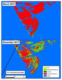 Habitat map of mangrove, marsh and vegetative change derived from WorldView-2 and Landsat-8 satellite imagery for Rookery Bay, Florida 2010-2018