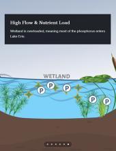 Phosphorus retention animation (still)