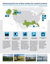 Blue Carbon management brief publication cover