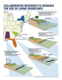 Living Shorelines Infographic