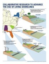 Living Shorelines Infographic