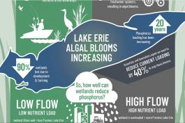 Lake Erie Algal Blooms Infographic