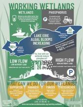 Working Wetlands Infographic